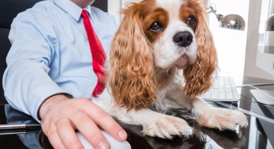 22 Giugno Giornata Mondiale Del Cane In Ufficio Radio Pico