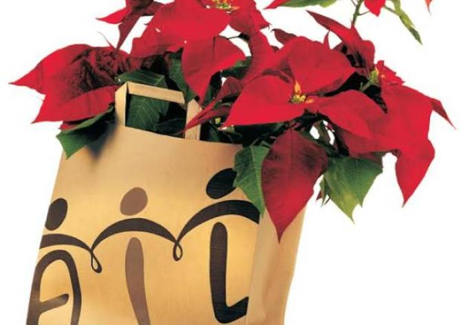 Stella Di Natale Piazze Italiane.Da 30 Anni Le Stelle Dell Ail Aiutano La Ricerca E